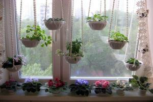 Свойства растений