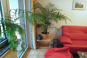 Растение-солитер