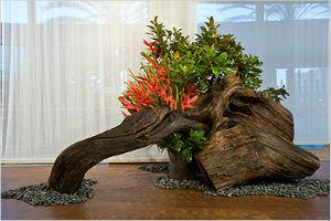 Сад корней