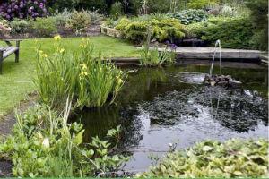 Водоемы в английском саду