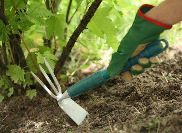 Уход за многолетними растениями