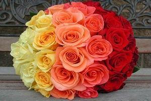 Виды и сорта роз, способы ухода, укрытия на зиму и обрезки