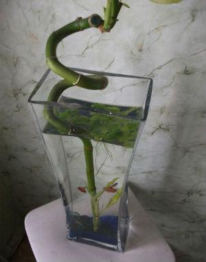 Ваза аквариум
