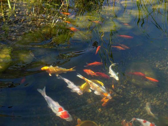 Водные растения и обитатели