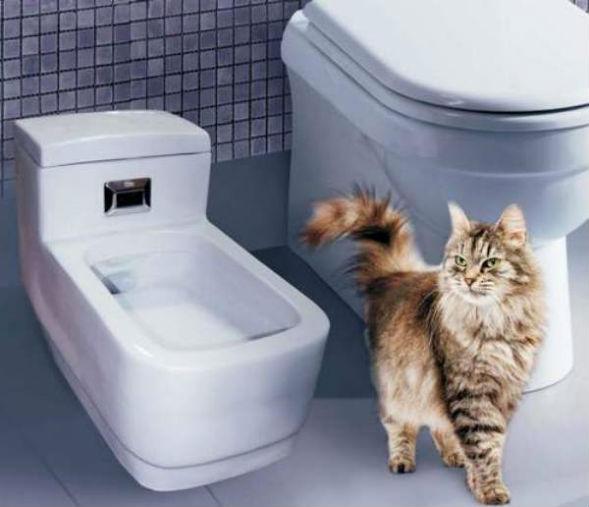 Як позбутися від котячого, запаху сечі в квартирі
