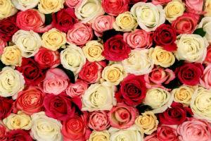 Декоративно-растущие многолетние растения - семейство розоцветные