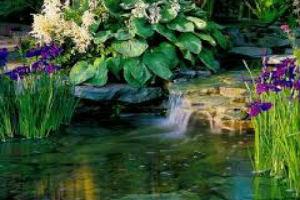 Надводные растения