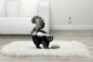 Причины и способы устранения неприятных природных и синтетических запахов в квартире